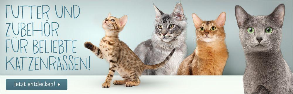 Katzenrassen Futter online kaufen