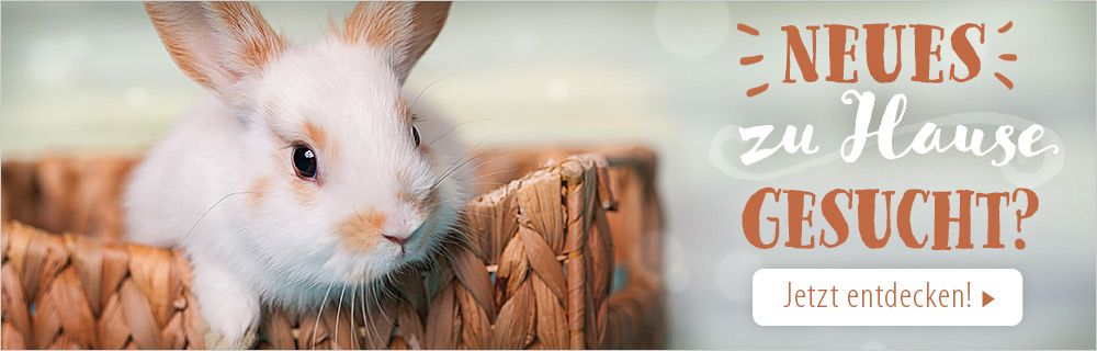 Finden Sie den perfekten Kaninchenstall!