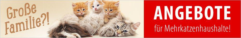 Jetzt günstige Artikel für Mehrkatzenhaushalte entdecken!