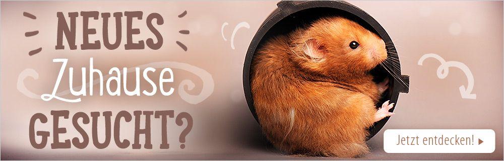 Finden Sie den perfekten Hamsterkäfig!
