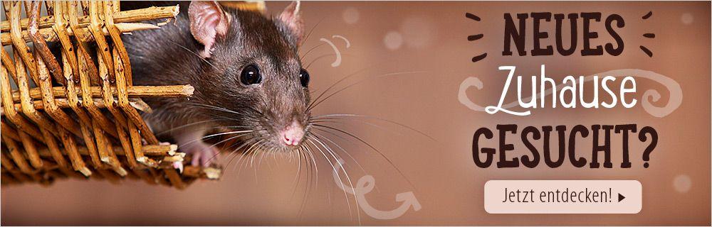 Finden Sie den perfekten Rattenkäfig!