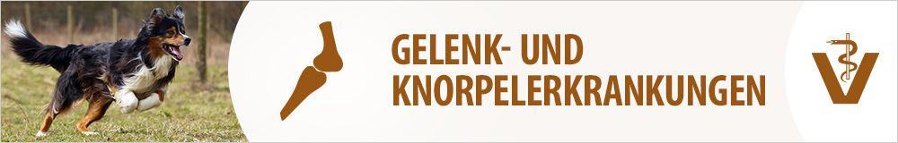 Gelenke & Knorpel