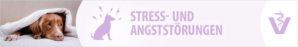 Stress & Angst