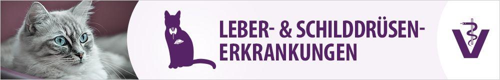 Leber & Schilddrüse