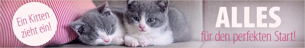Ein Kätzchen zieht ein - jetzt perfekt vorbereitet sein!