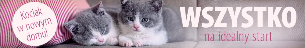 Kociak w nowym domu