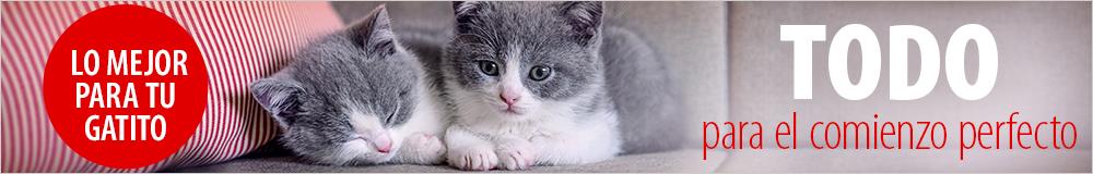 Comida y accesorios para gatitos