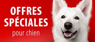 Offres spéciales chien