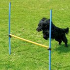Hundesport: Agility, Fahrradfahren, Hundetraining