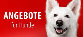Sonderangebote Hund