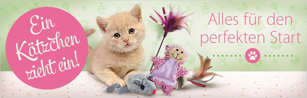 Kitten Special - Alles für den perfekten Start