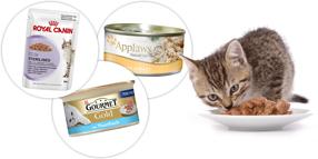 Våtfoder för katter