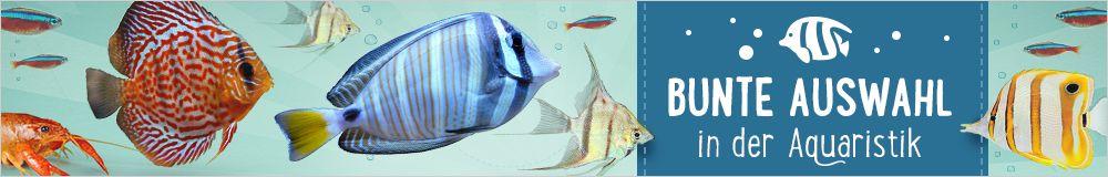 Jetzt Aqua Angebote bei zooplus entdecken!