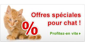 Offres spéciales Chat