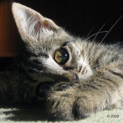 Acana Grasslands Katzenfutter