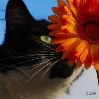 Acana Pacifica Katzenfutter