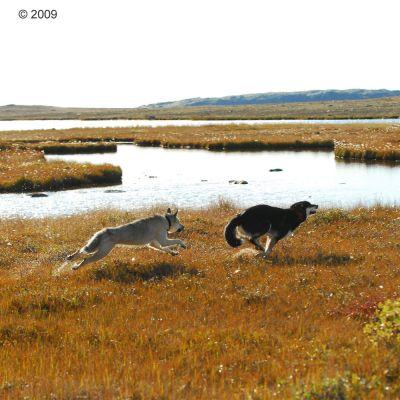 Acana Wild Prairie Dry Dog Food
