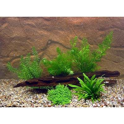 Aquarienpflanzen Zooplants Garnelen und Zwergkrebs Sortiment