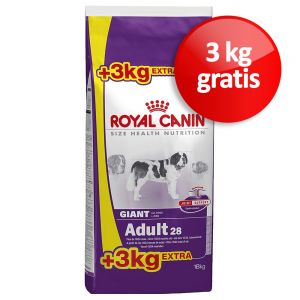 royal canin hundefutter zu discountpreisen bei bitiba. Black Bedroom Furniture Sets. Home Design Ideas