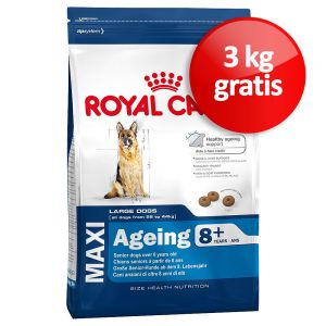 bonuspack royal canin maxi ageing 8. Black Bedroom Furniture Sets. Home Design Ideas