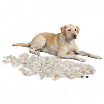 Furminator brosse chien
