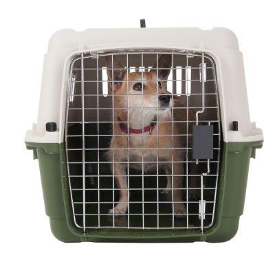 grande cage de transport classique pour chien prix avantageux chez zooplus cage de. Black Bedroom Furniture Sets. Home Design Ideas