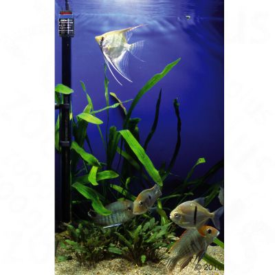 Eheim j ger chauffage pour aquarium zooplus for Aquarium en solde