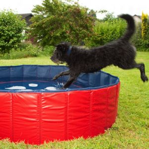 Dog jumps into Doggy Pool