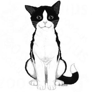 Kapsičky pre mačky Felix