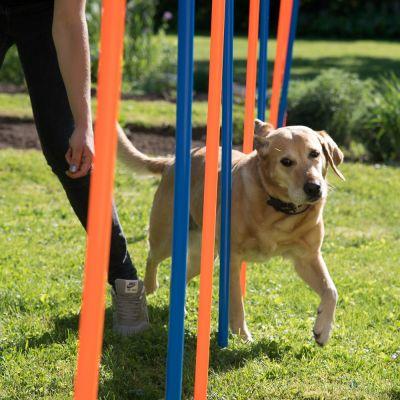 Fun & Sport Dog Agility Weave Poles