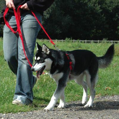 HALTI - Harnais anti-traction pour chien - zooplus