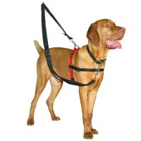 Colliers anti traction pour chien