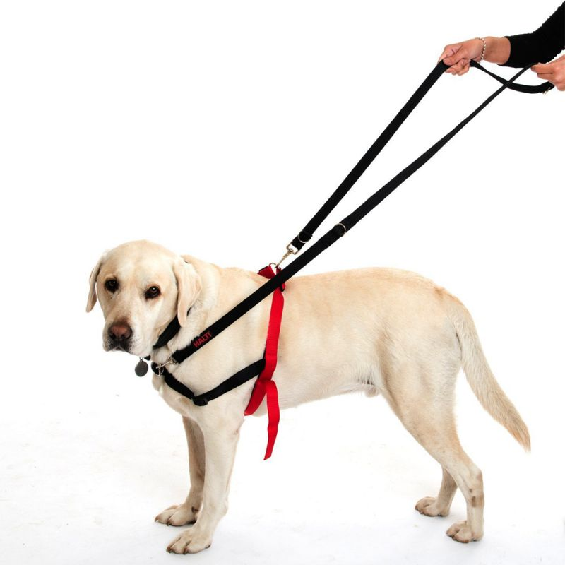 dog training leads how to use