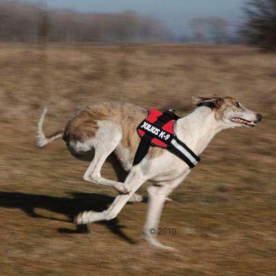 Julius k9 rouge harnais pour chien zooplus - Fabriquer un harnais pour chien ...
