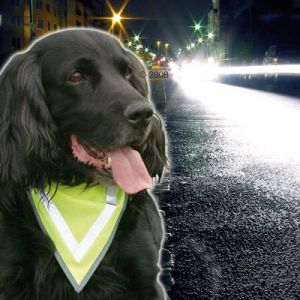 High Viz dog's neck scarf bandana