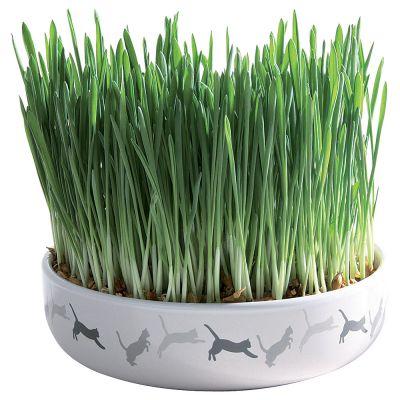keramikschale mit katzengras g nstig bei zooplus. Black Bedroom Furniture Sets. Home Design Ideas