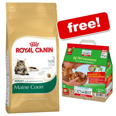 Royal Canin Maine Coon Kg Plus  Dry Cat Food