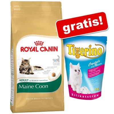 royal canin maine coon g nstig bei zooplus. Black Bedroom Furniture Sets. Home Design Ideas