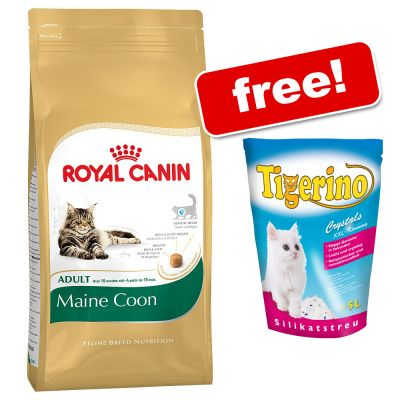 10kg royal canin maine coon adult kitten 5l tigerino. Black Bedroom Furniture Sets. Home Design Ideas