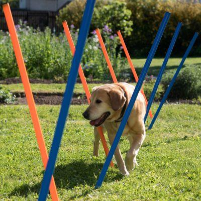 kit complet agility pour chien zooplus. Black Bedroom Furniture Sets. Home Design Ideas