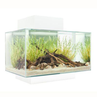 Nano aquarium fluval edge i prix avantageux chez zooplus for Nano aquarium poisson