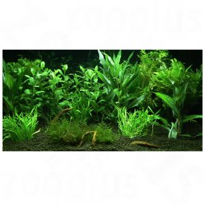 Plantes d 39 aquarium zooplants 39 jardin d 39 eden 39 a prix for Destockage plantes jardin