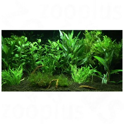 Plantes d 39 aquarium zooplants 39 jardin d 39 eden 39 for Destockage plantes jardin