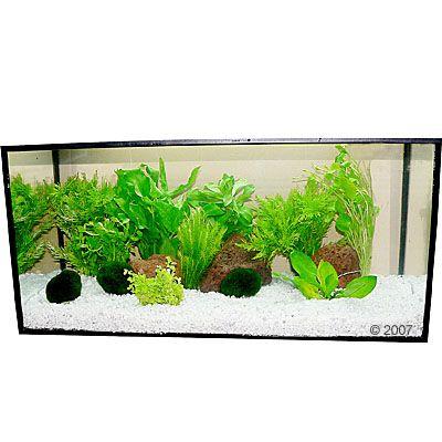 plantes d aquarium zooplants oasis vert clair 192 prix avantageux chez zooplus