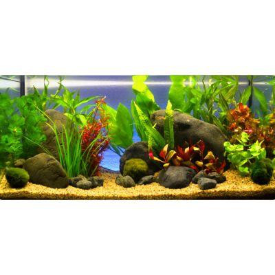 Plantes d 39 aquarium zooplants 39 touche de rouge 39 prix for Prix poisson rouge maxi zoo