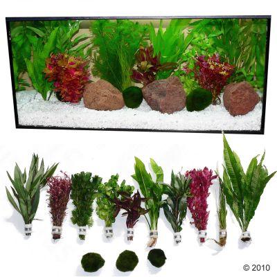 Plantes d 39 aquarium zooplants 39 touche de rouge 39 for Prix poisson rouge maxi zoo