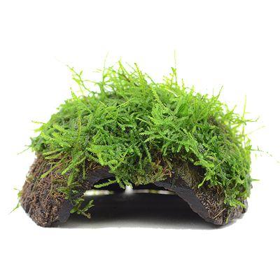 zooplants plantes pour aquarium zooplus. Black Bedroom Furniture Sets. Home Design Ideas