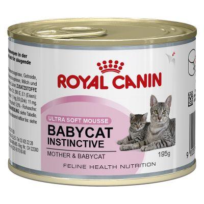 Royal Canin Kitten Karma Dla Kota Tanio W Zooplus Royal