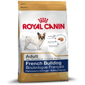 buldog francuski dorosły pies