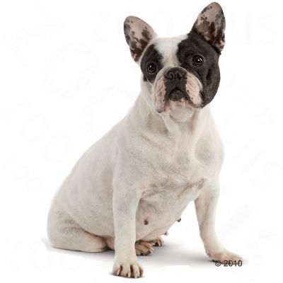 royal canin breed french bulldog adult croquettes pour chien zooplus. Black Bedroom Furniture Sets. Home Design Ideas